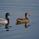 Ducks In a Row by TwisterKidMedia