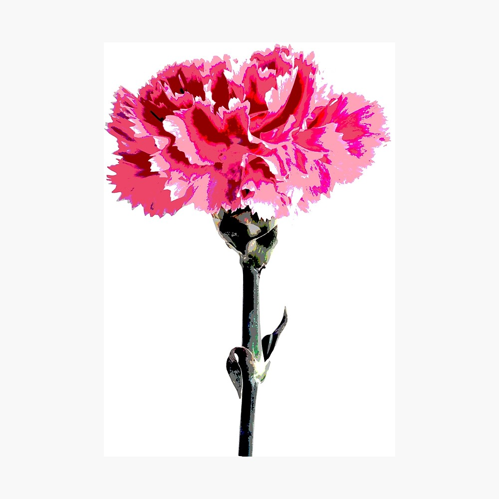 Psychedelic carnation Photographic Print