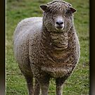 Are Ewe Talking to Me?  by Sheryl Gerhard