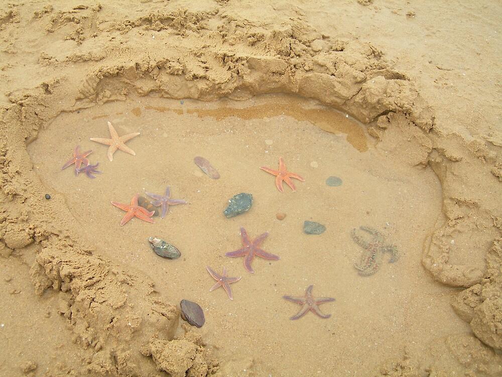 Star Fish by John Part