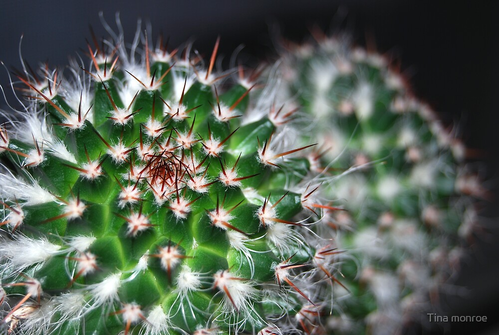 cactus (3) by Tina monroe