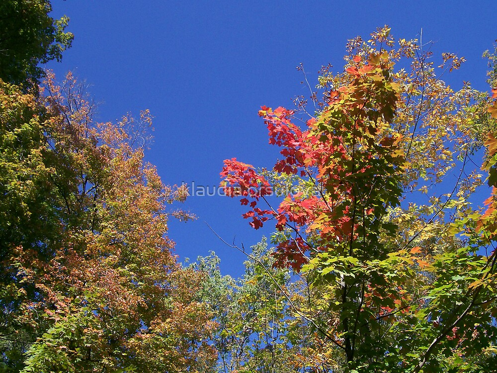 seasons  by klaudia orsulova