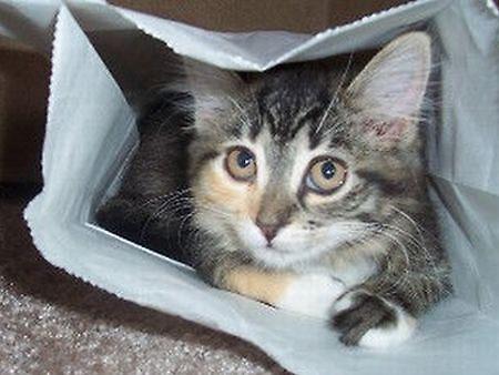 Cat in a Bag by SandoPhotos