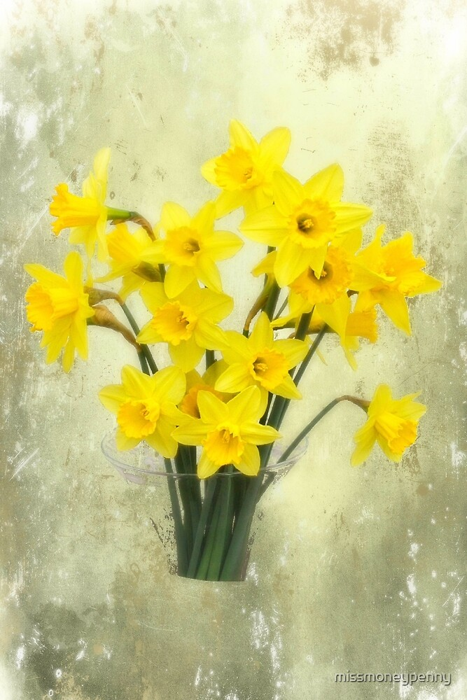 Daffodils in springtime by missmoneypenny
