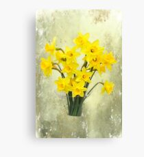 Daffodils in springtime Canvas Print