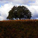 sonoma county tree  by capbydiana
