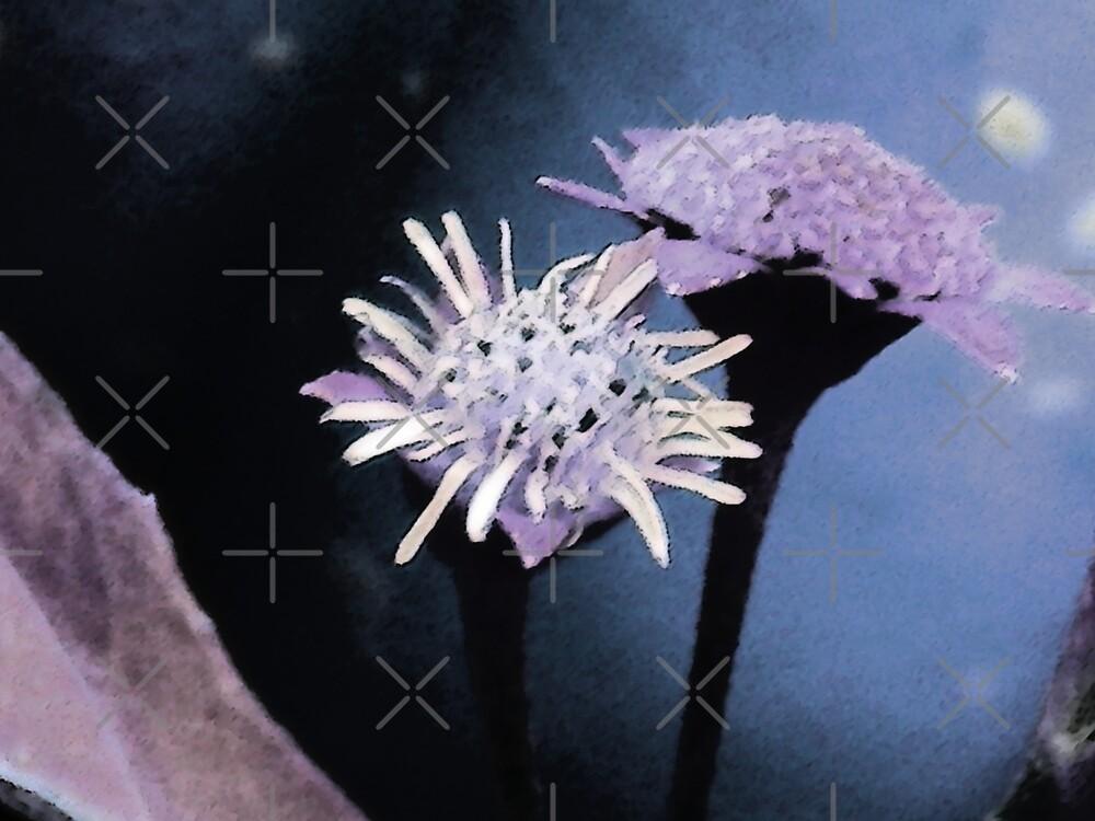 Moon Flowers by Rebekah  McLeod