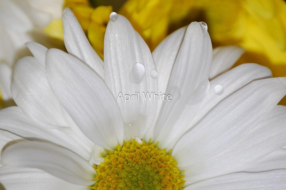 Droplets by April White