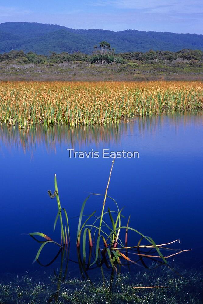 Reeds - Freshwater Lake by Travis Easton