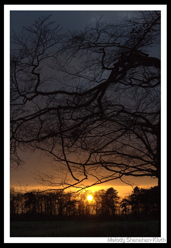 Branch over Sunset by Melody Shanahan-Kluth