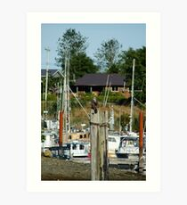 Juvenile Eagle on Perch over Working Harbor (Masset, Haida Gwaii, British Columbia, Canada, August 2010) Art Print
