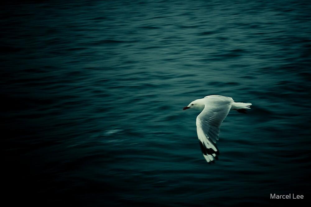 Silver Gull by Marcel Lee