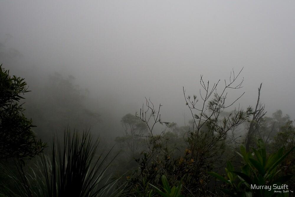 Purlingbrook Falls Mist by Murray Swift