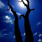 Bluetiful tree by Garry Schlatter