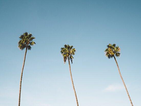 Quot Three Palm Trees Blue Sky California Quot Photographic Print