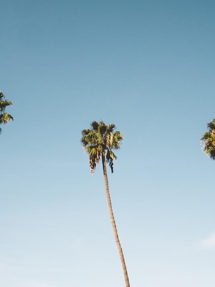 Tres palmeras Blue Sky California de TravelDream