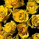 Yellow roses by ninamsc