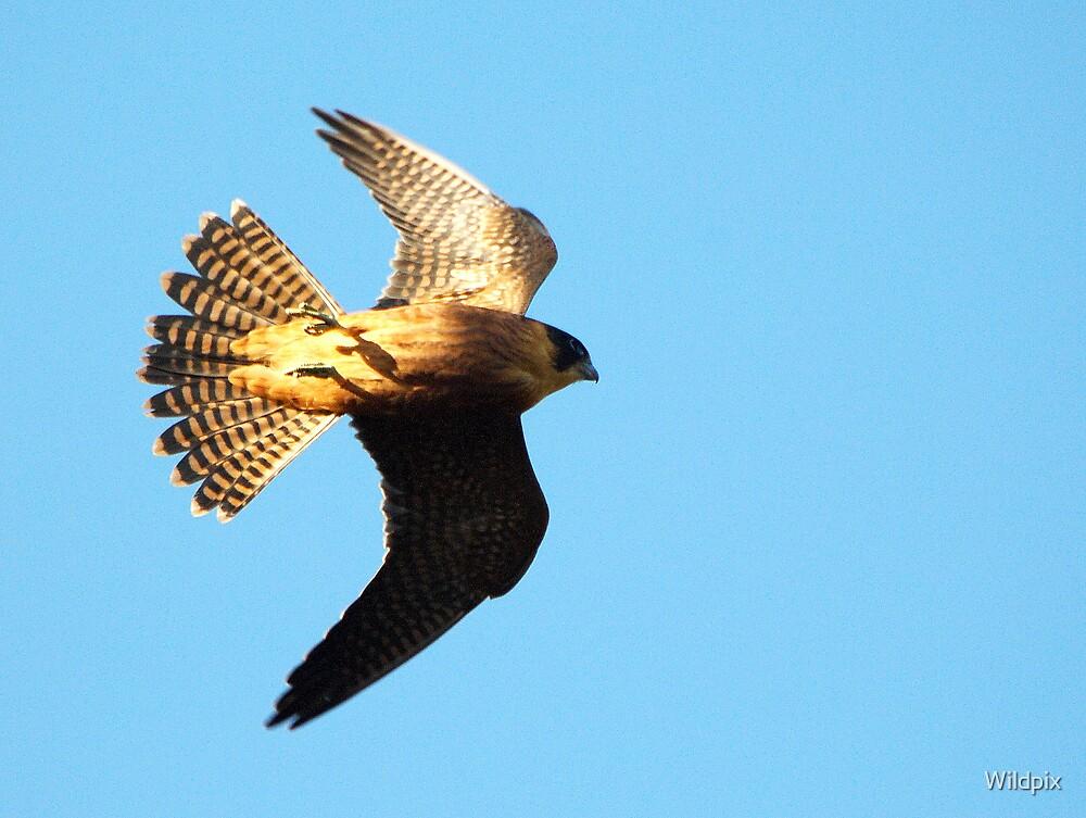 Aerial Scythe (2) by Wildpix