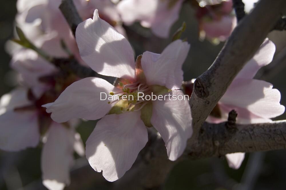 Almod Blossom (Spain 2006) by Darren Robertson