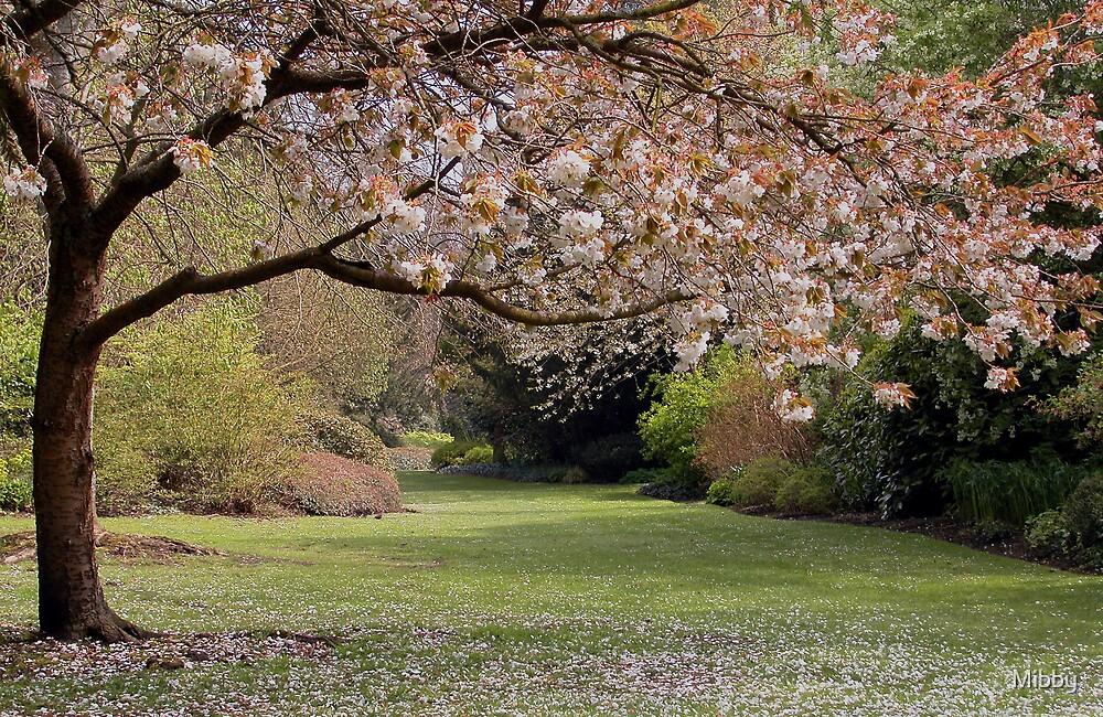 Springtime and blossom by Mibby