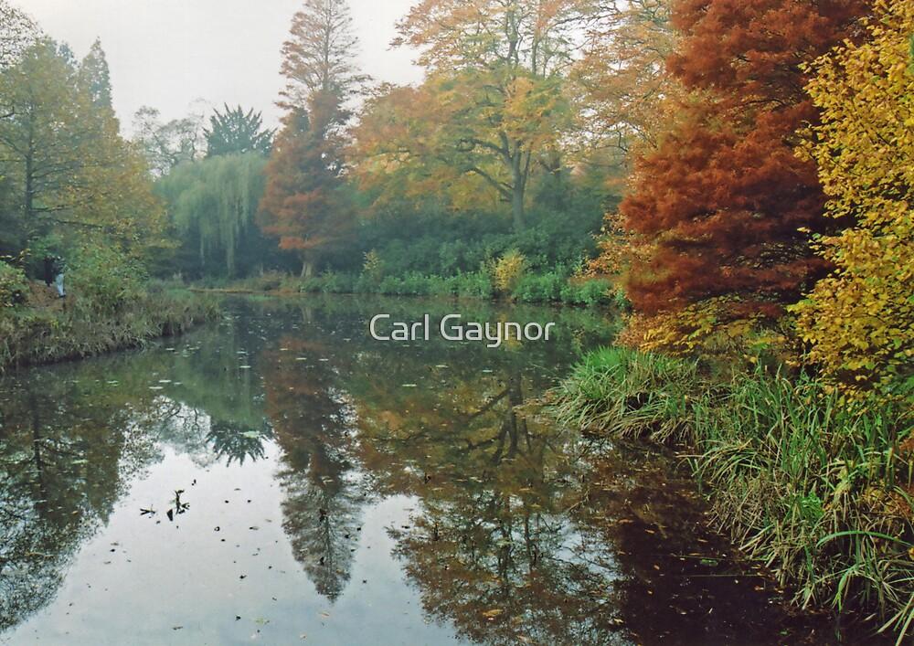 Public Garden in Mist  by Carl Gaynor