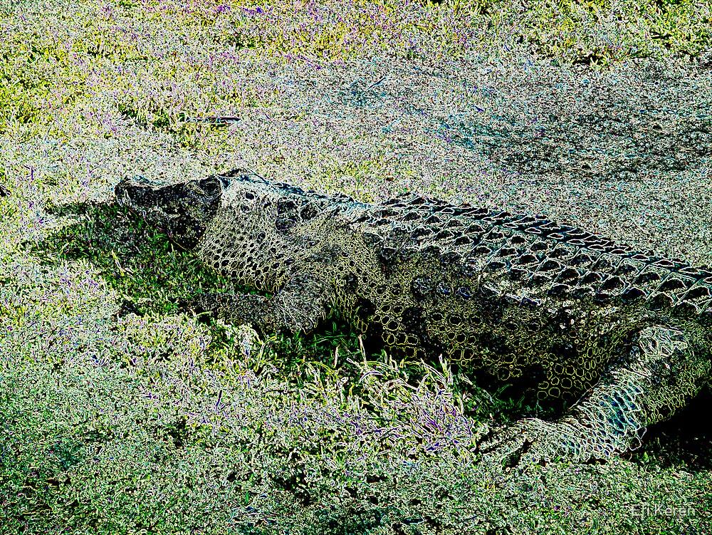 Alligator 4 by Efi Keren