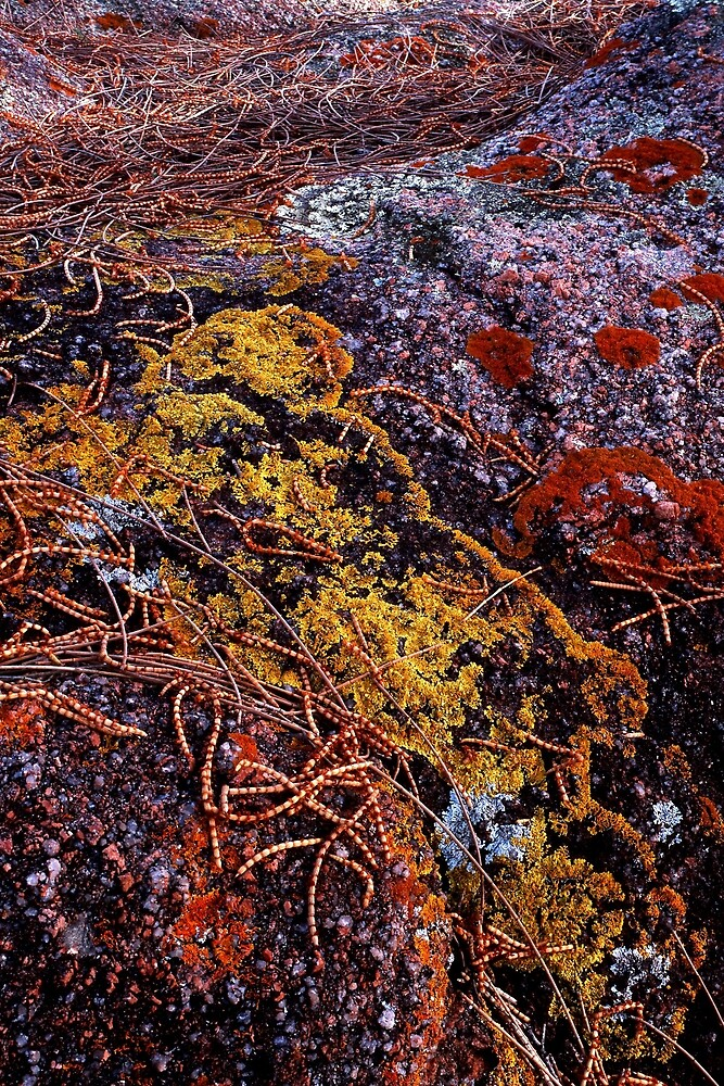 Carpet of colorful lichen by mundoview