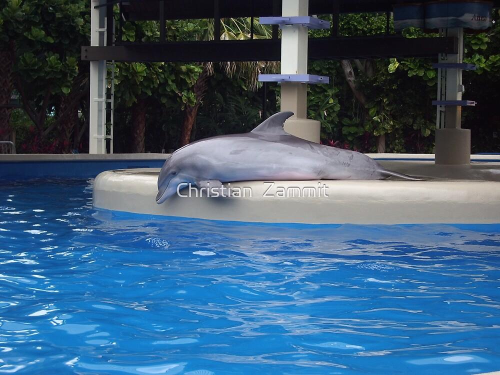 Dolphin by Christian  Zammit