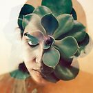 a green rose by sleepwalker