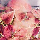 beneath the leaf by sleepwalker