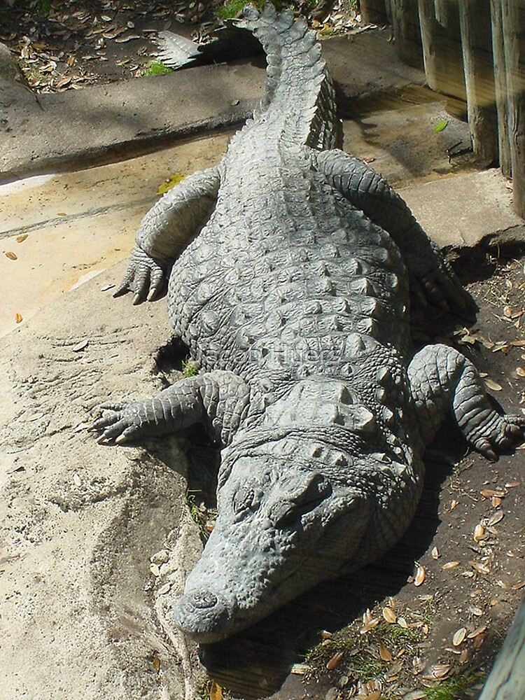 Croc  Croc by Jacob Hyers