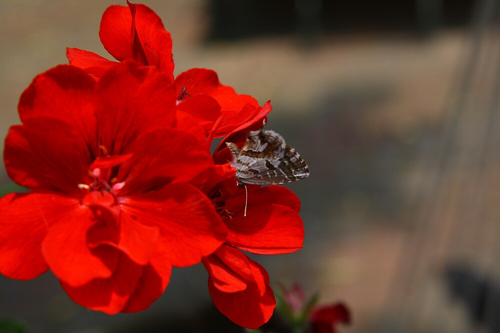 a Tiny butterfly at work by Roux Nel
