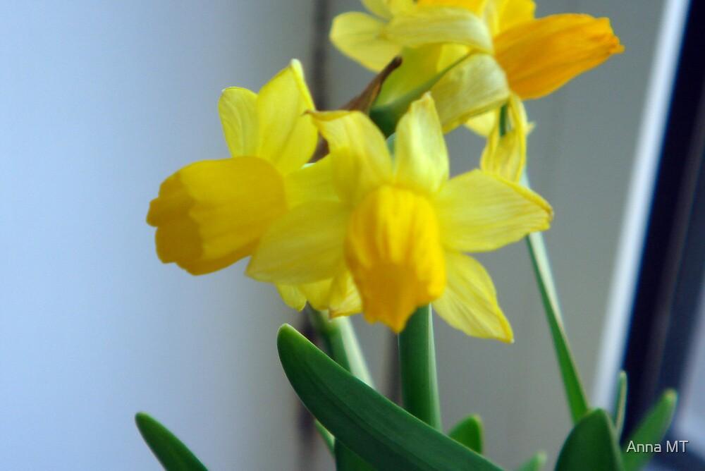 Birth of Spring by Anna MT
