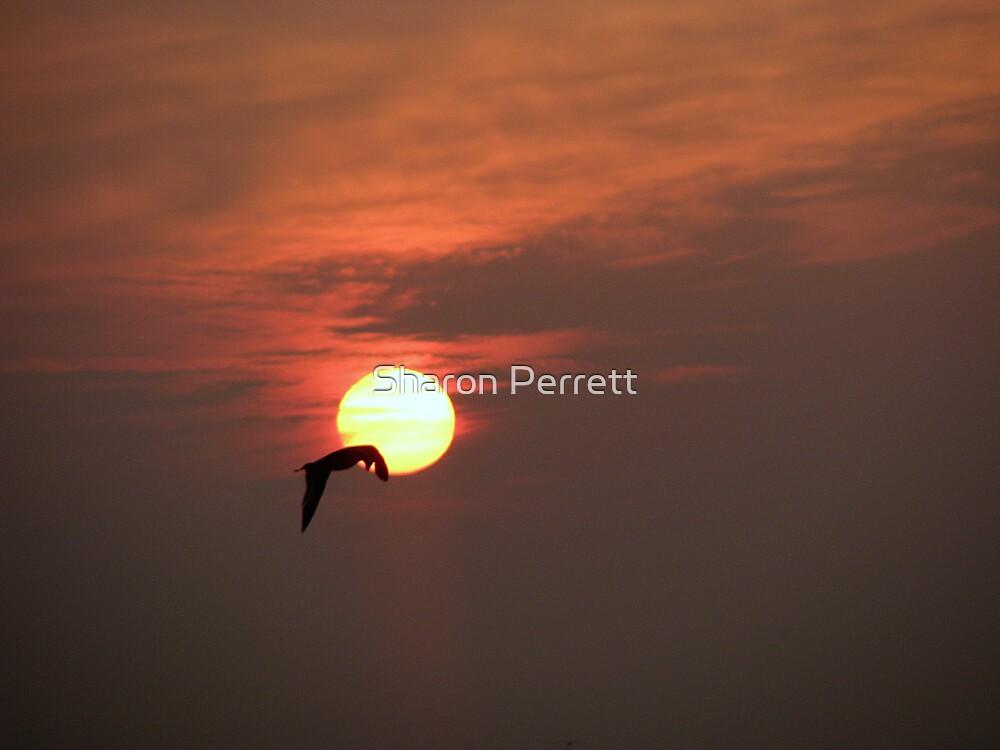 Sunset 2 21-12-07 by Sharon Perrett