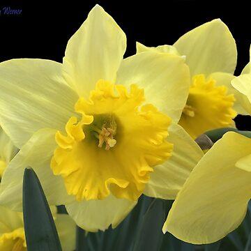 Spring by ritesideup