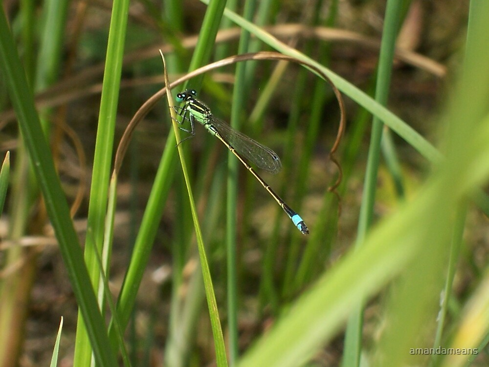 Dragonfly Among the Reeds by amandameans