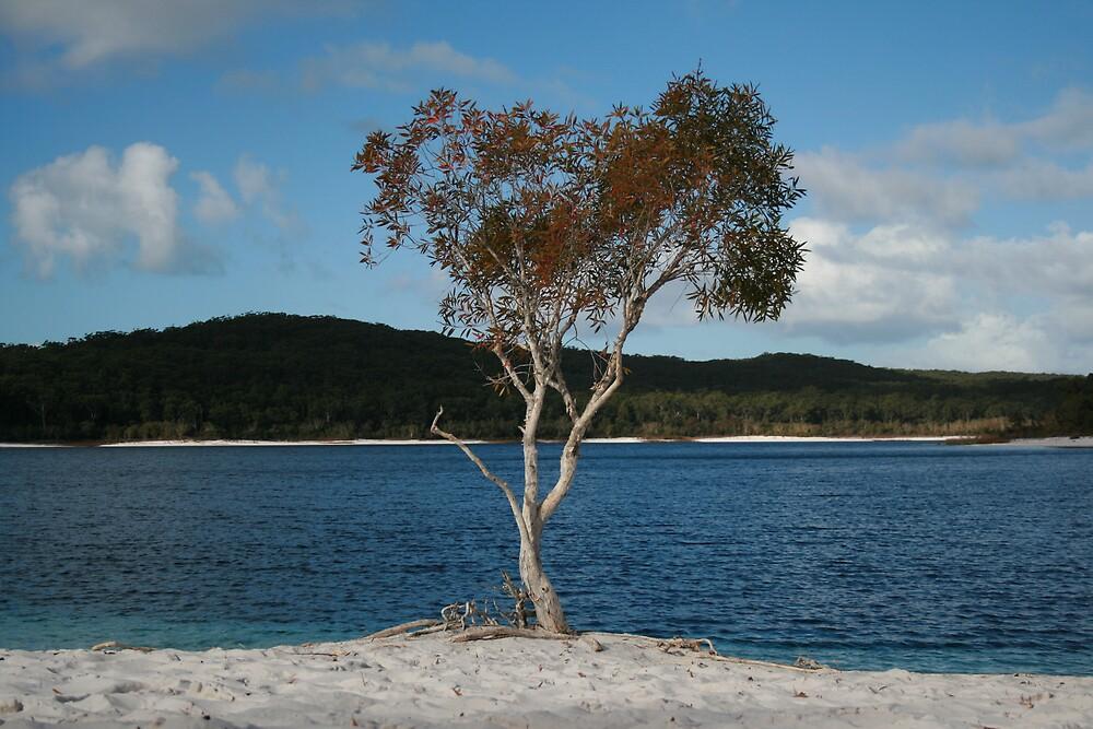 Lake Mackenzie, Fraser Island, Australia by Thomas Entwistle
