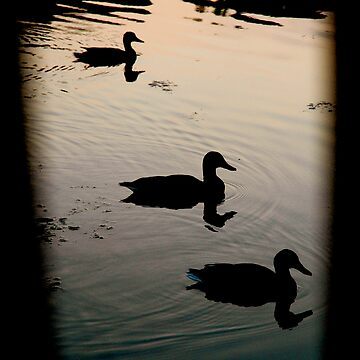 Ducks Silhouetted by JennyArtist