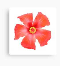 Tropical Hibiscus Flower Vector Canvas Print