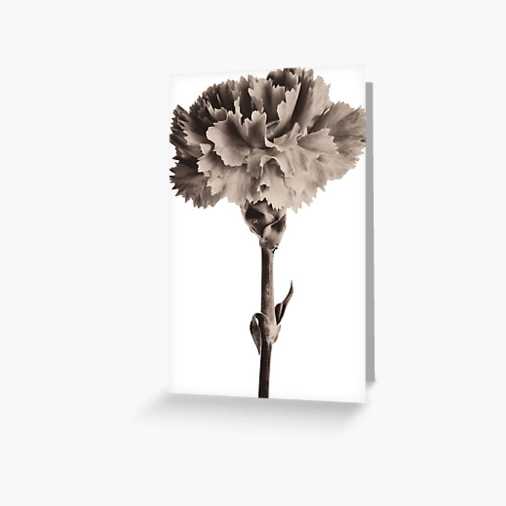 Antique Carnation Greeting Card