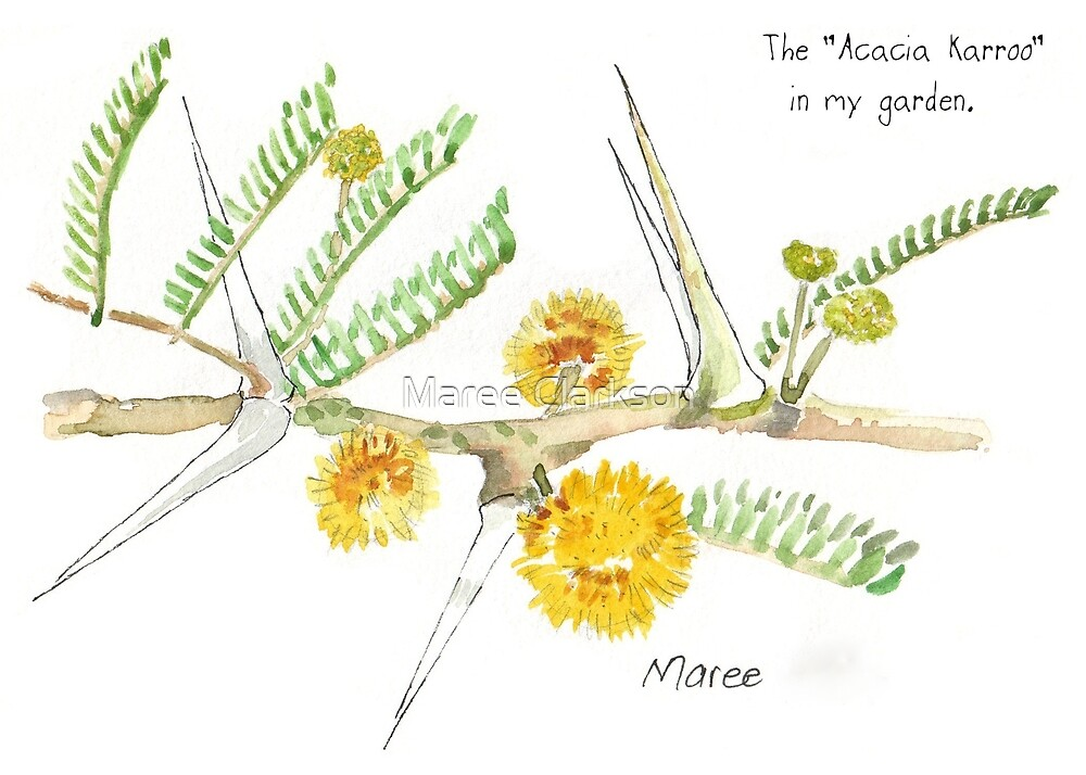 Acacia karroo thorns - botanical illustration by Maree Clarkson