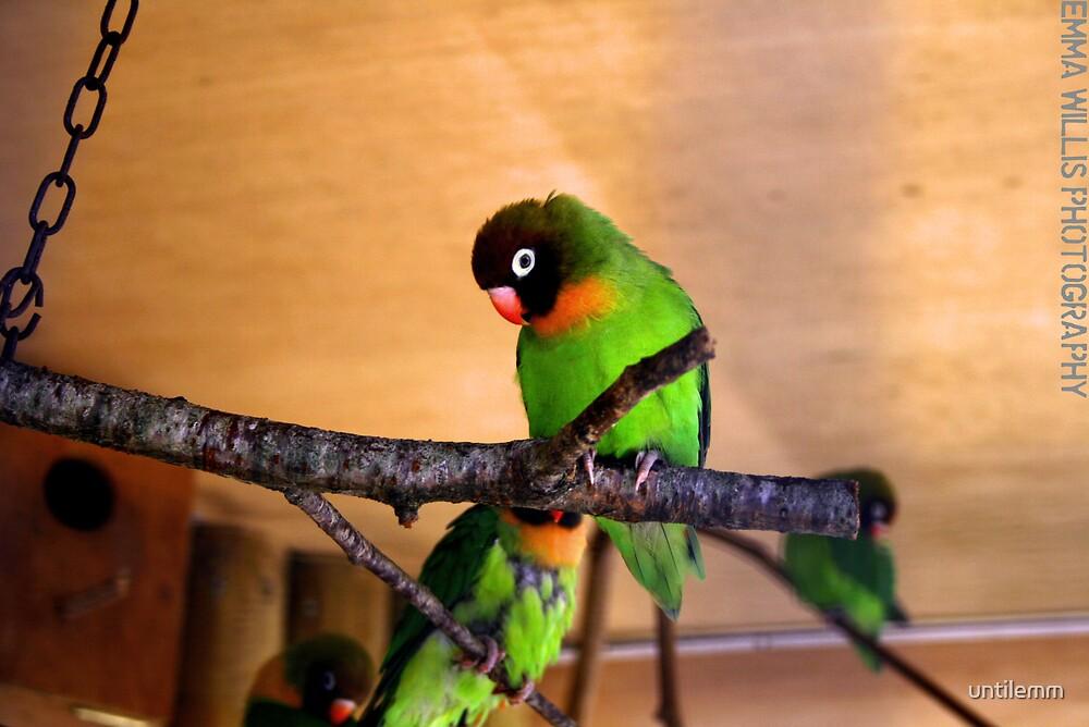 Bird. by untilemm