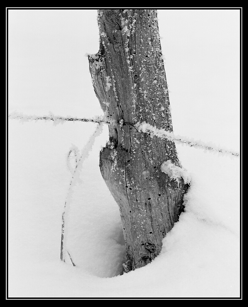Frosted Fence by mymamiya