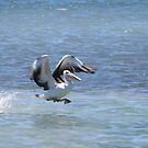 The Pelican Hop by kalaryder