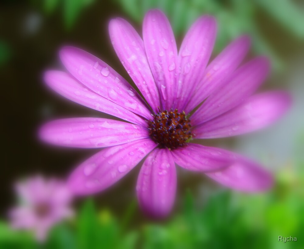 Soft focus purple flower by Rycha