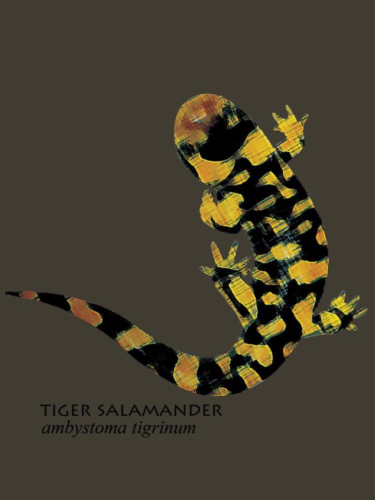 Tiger Salamander by littleredplanet