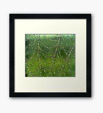 Spider Web  Framed Print