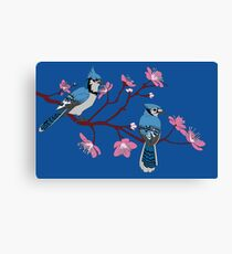 Blue Jays mating Season Canvas Print