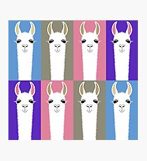 LLAMAS EIGHT Photographic Print
