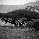 Tree of Life by Scott Denny